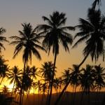 Coucher de soleil palmiers Bahia Brésil