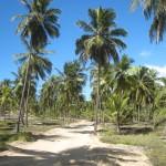 Route palmeraie Brésil