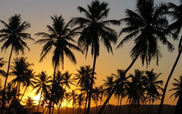 Palmiers_Brésil_VH